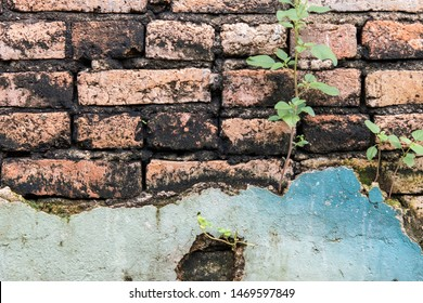 Old Brick Wall Building Background