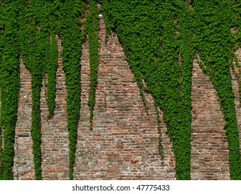 old brick wall covered with vines