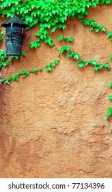 old brick wall and grape-vine