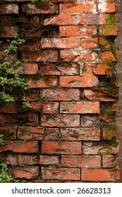 Old brick wall with ivy