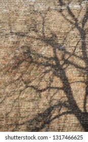 Old brick wall made of red bricks shadowed with old tree
