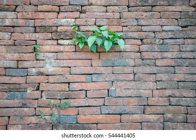 old brick wall and tree growth
