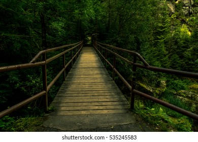 Old bridge in green, mystic in the green forest.