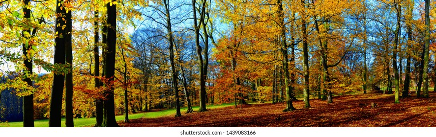 Old broad leaf (probably beech) trees in the park at autumn afternoon daylight,foliage. Red, yellow.Panoramic image.South Moravia,Europe.