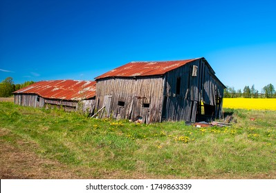Old broken down barn with flowering canola field in background, Sweden