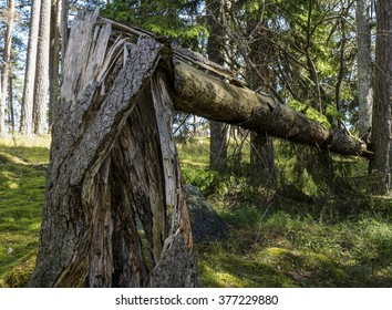 Old broken tree - Shutterstock ID 377229880