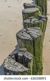 Old Broken Wooden Pole With Algae Pattern At Beach - Wave Breaker