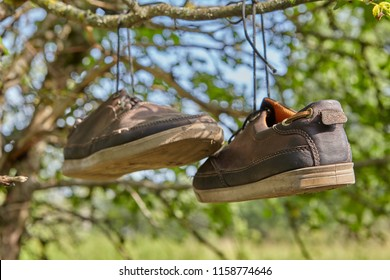 Old brown leather sneakers hang on laces on a tree branch in the countryside.