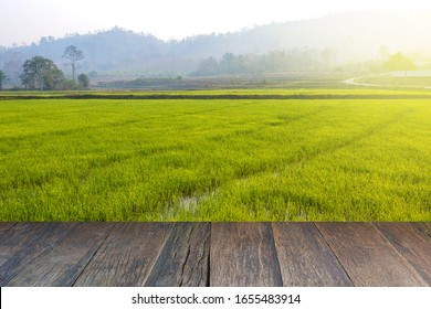 Old brown wooden floor beside green rice field in the evening and beam sunrise.