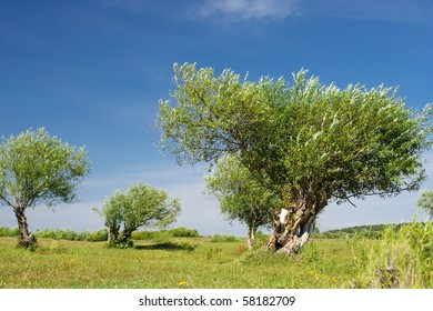 Old bushes on a meadow