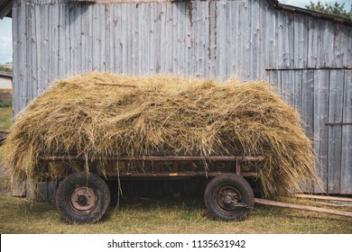 Old cart with hay on the background of the hay