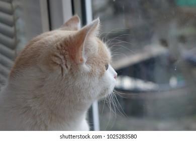 Old cat. Home cat.