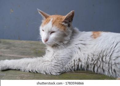 홍대의 늙은 고양이