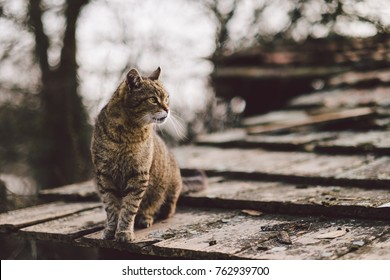 Old cat on roof