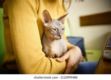 old cat on the womans hands. old ugly cat of the Sphynx breed in the hands of the mistress