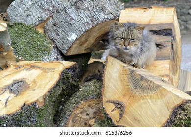 The old cat rests in the sun on top of wood piles / The cat rests in the sun