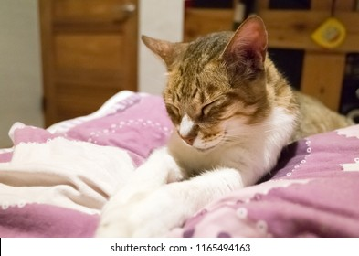 old cat sit and close eyes on bed