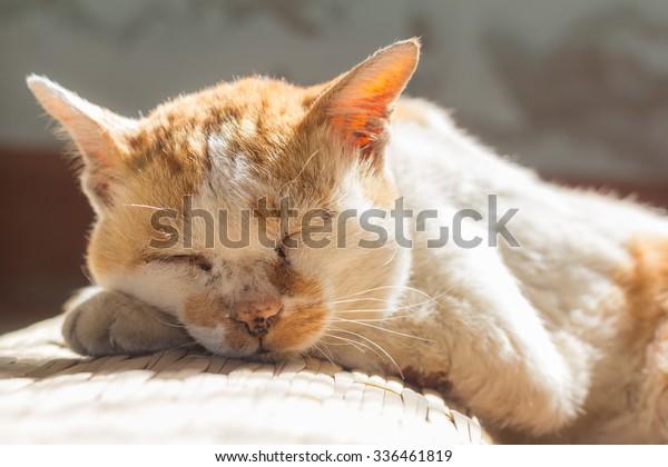 old cat sleeping on floor