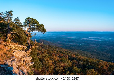 Old Cedar tree on the edge of a cliff in Mt. Magazine state park Arkansas