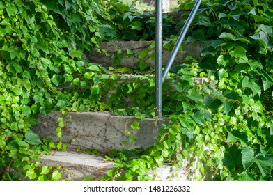 old cement steps in german village grown with creeping vine plants