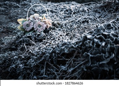 Old cemetery artificial flower basket in overgrown ivy bush weed on a graveyard covered in cold ice frost in cold autumn, fall or winter season morning as All saints da, All souls day grief, sadness