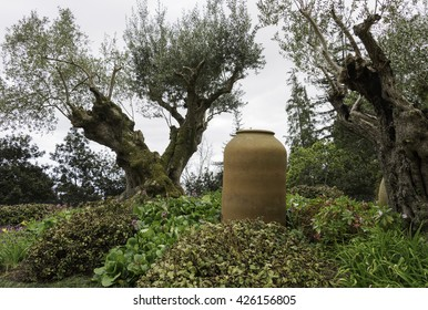 old ceramic vase and olive tree in tropical garden in Funcahl on the portuguese island of madeira