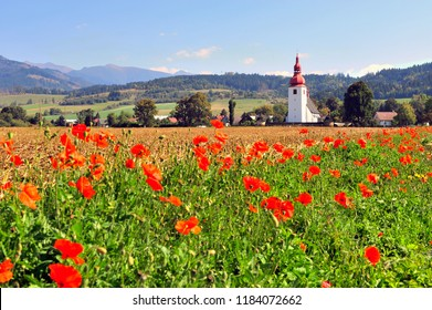 Old chapel in the field of wild red flowers. Tatras mountains, Slovakia on summer