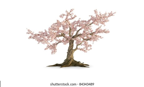 old cherry tree isolated on white