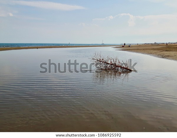 An old christmas tree washed up on the beach at Gruissan in Southern France