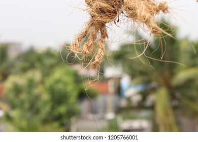 Old Coconut Coir for Nature Look