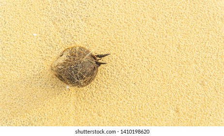 old coconut on the sand beach