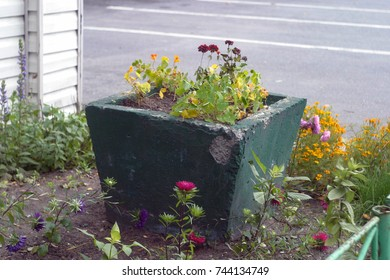 An old, concrete, green flowerbed with fading flowers in the town yard. Autumn and summer background