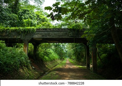Old concrete overpass on a hiking trail near Bukit Timah, Singapore