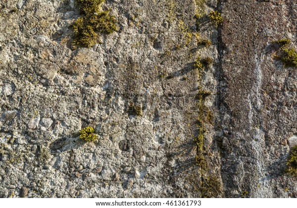 old concrete wall with moss