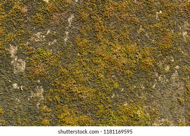 Old concrete wall with moss on, texture. Mossy concrete surface wallpaper. Mossy beton background image. Beton with bryophyte backdrop. Moss-grown old beton wall.