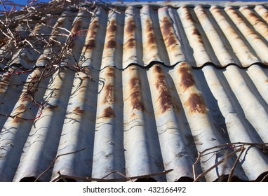 Old corroded rusted metal corrugated iron roof  of an old shed with dormant Virginian creeper at one end is almost one hundred years old  giving a rustic grungy charm to an urban backyard.