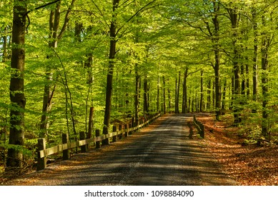 Old country road with stone and wood railings going through a fresh green beech forest. Morning sunlight coming in from the side. Soderasen national park in Sweden.