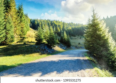 old country road through forest at sunrise.  nature scenery with trees along the way. sunny autumn landscape with clouds on a blue sky. cold foggy weather