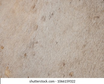 Old cow hide as background, Close up.