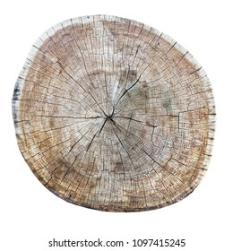 Old cracked tree trunk cross section isolated with clipping path included.