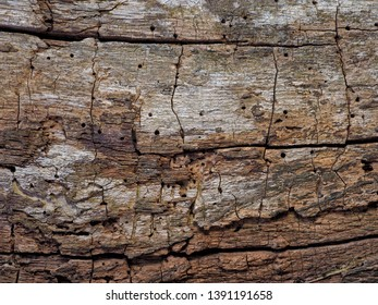 old cracked wooden background with a pronounced structure, cracks and traces of a shashel. background.