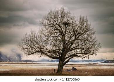 An old crooked tree sits in a snow-covered field surrounded by dark stormy clouds, with a huge bald eagle's nest constructed among bare branches. In the background, wind turbines sit on mountains.