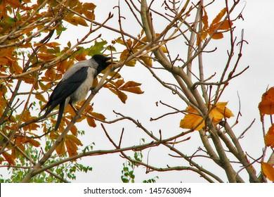 Screaming Bird Images, Stock Photos & Vectors | Shutterstock