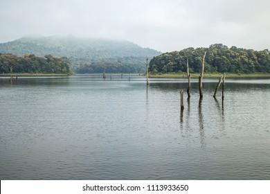 Old dead tree barks in river water at Periyar Tiger Reserve National Park wildlife sanctuary at Thekkady, Kerala  India.