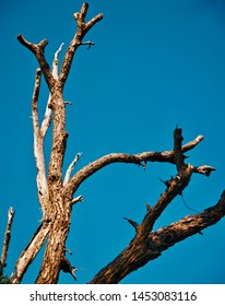 Old and dead tree branches with blue sky background photo