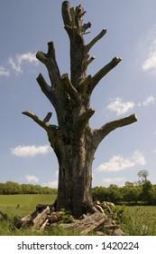 An old dead tree in a field