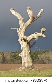 An Old Dead Tree with a Stormy Background