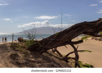 Old dead tree trunk on beach in Makena State Park in Maui, Hawaii with island in background