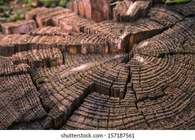 Old decaying stump