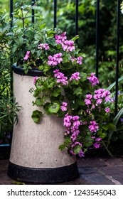Old decorative chimney pot being repurposed as a plant pot, holding trailing geraniums and fuchsias